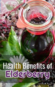 Elderberries for Health